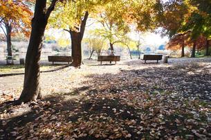 秋の公園の素材 [FYI00226227]