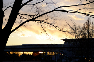 舎人公園夕景色の素材 [FYI00226237]
