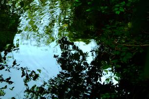 水面の木々の素材 [FYI00226270]