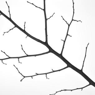 snow wood1の写真素材 [FYI00226301]