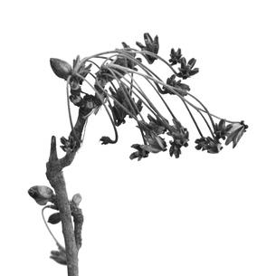 snow flower2の写真素材 [FYI00226310]