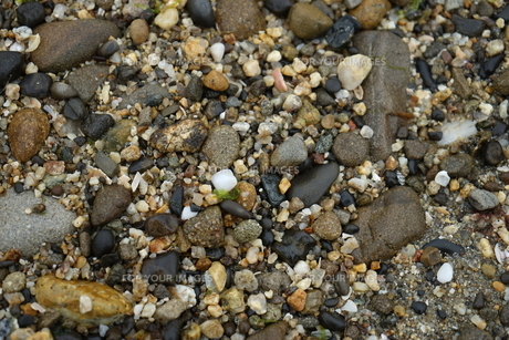 海の砂の素材 [FYI00226367]