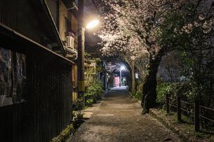 夜の哲学の道の写真素材 [FYI00226406]