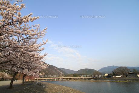 嵐山の桜の写真素材 [FYI00226410]