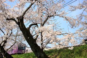 桜と電車の写真素材 [FYI00226442]