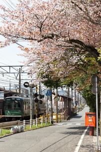 桜と電車の写真素材 [FYI00226444]