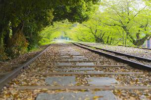 京都・蹴上浄水のインクライン跡地の写真素材 [FYI00226501]