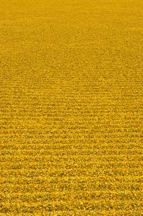 日本庭園・砂の波模様の写真素材 [FYI00226600]