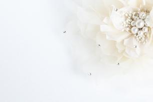 white flowerの写真素材 [FYI00226688]