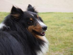 犬の写真素材 [FYI00226730]