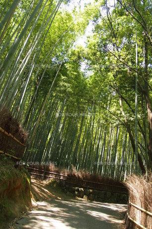 竹林の写真素材 [FYI00226743]