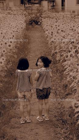 ひまわりと少女たちの写真素材 [FYI00226763]