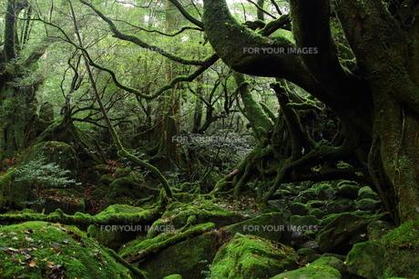 白谷雲水峡の写真素材 [FYI00226775]