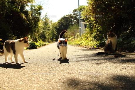 猫島の写真素材 [FYI00226777]