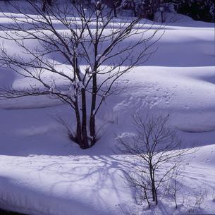 冬樹の写真素材 [FYI00227208]