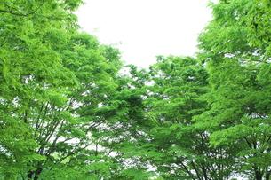 新緑 エコイメージの写真素材 [FYI00227342]