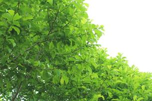 新緑 エコイメージの写真素材 [FYI00227344]