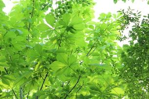 新緑 エコイメージの写真素材 [FYI00227349]
