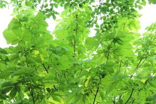 新緑 エコイメージの写真素材 [FYI00227350]