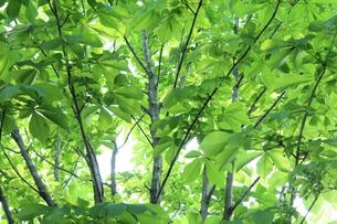 新緑 エコイメージの写真素材 [FYI00227353]