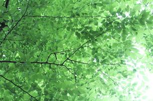 新緑 エコイメージの写真素材 [FYI00227354]