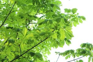 新緑 エコイメージの写真素材 [FYI00227360]