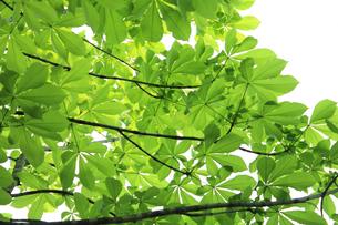 新緑 エコイメージの写真素材 [FYI00227361]