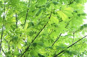 新緑 エコイメージの写真素材 [FYI00227363]