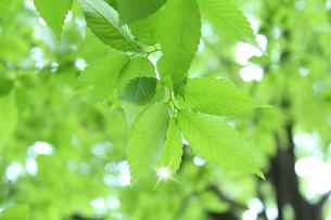 新緑 エコイメージの写真素材 [FYI00227367]