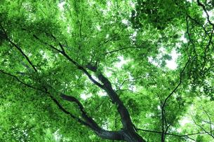 新緑 エコイメージの写真素材 [FYI00227368]