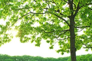 新緑 エコイメージの写真素材 [FYI00227369]