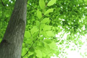 新緑 エコイメージの写真素材 [FYI00227376]