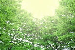 木漏れ日の写真素材 [FYI00227389]
