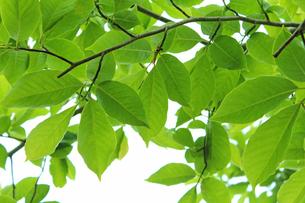 新緑 エコイメージの写真素材 [FYI00227396]