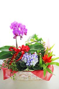 花かごの写真素材 [FYI00227397]