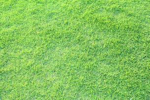 芝生の写真素材 [FYI00227413]
