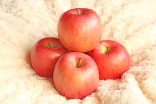 りんごの写真素材 [FYI00227546]