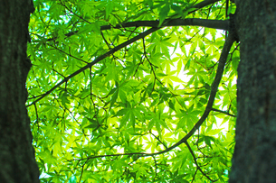 新緑 エコイメージ の写真素材 [FYI00227755]