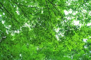 新緑 エコイメージの写真素材 [FYI00227776]