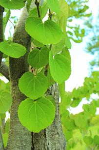 新緑 エコイメージの写真素材 [FYI00227779]