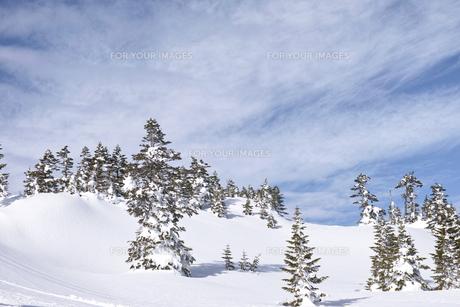 志賀高原の雪景色の写真素材 [FYI00227848]