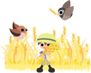 収穫の写真素材 [FYI00227970]