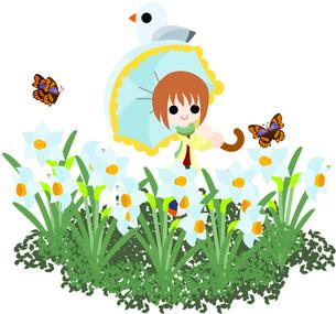 水仙の花畑を、日傘をさして歩く女性の写真素材 [FYI00228116]
