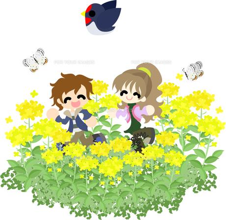 菜の花の花畑で楽しそうに走るカップルの写真素材 [FYI00228123]