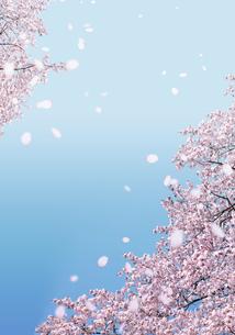 青空に舞う桜 の写真素材 [FYI00228284]