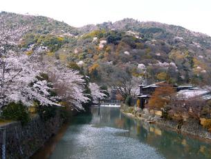 春の山と川と桜 の写真素材 [FYI00228291]