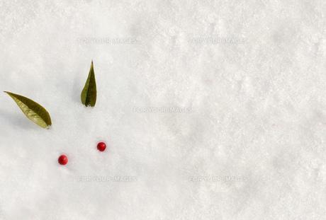 雪うさぎと雪野原の素材 [FYI00228293]