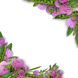 エンドウ豆と赤詰草のフラワーアレンジメント の写真素材 [FYI00228319]