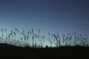 星湧く夜の奈良 曽爾高原の写真素材 [FYI00228658]