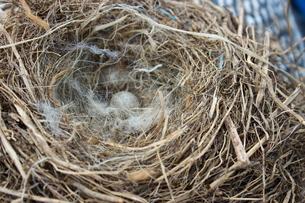 親を失った卵たちの写真素材 [FYI00229052]